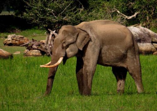 Sri Lanka020
